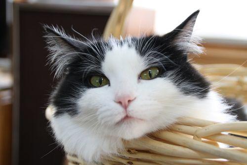 izzy cat